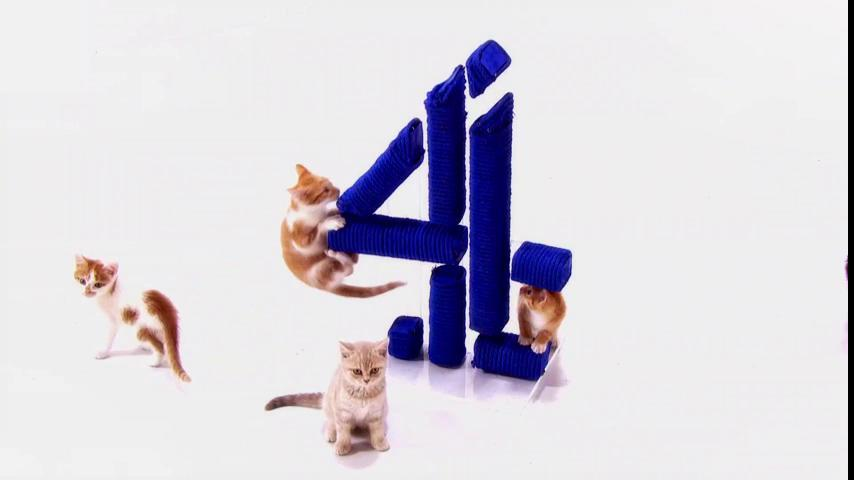 Kittens. The palate cleanser your Friday night needs. #TheLastLeg...