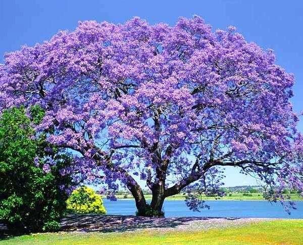 RT @ntmi1922: Good morning Twitter friends Thank you for a great time ̄タタ ゚フペフᄍ゚フホ¬リリᄌマ゚フマ゚フᄏ゚プメミ Have a fabulous weekend.  Jacaranda ̄タタ Glory, honor https://¬タᆭ