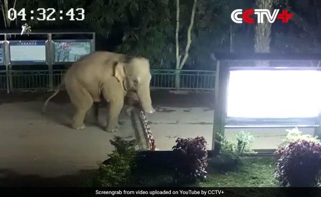 Caught On Camera: Elephant Crosses China-Laos Border During Morning Walk