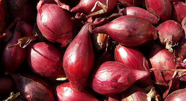 Onion could help fight TB antibiotic resistance