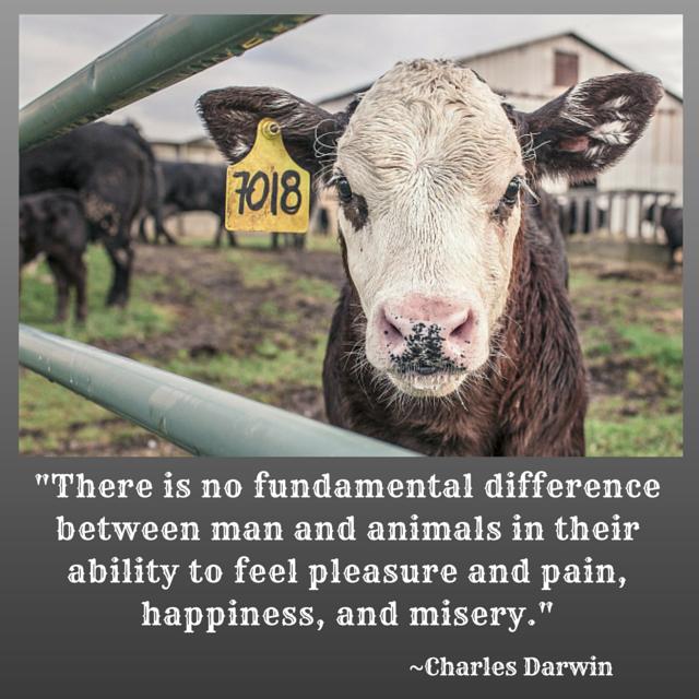 #DarwinDay