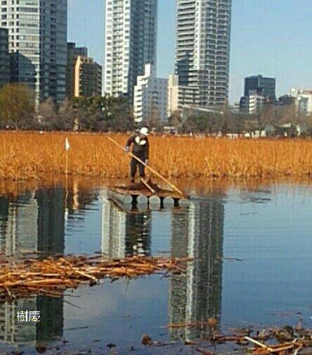 お早う御座います。  本日も宜しくお願い致します。  #樹慶  #不忍池