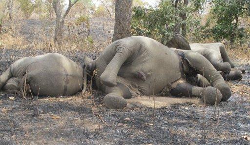 8 maut angkara pemburu haram di Cameroon