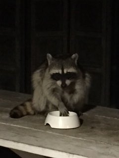 A visitor at my house tonight. https://t.co/IWlGOf66zK