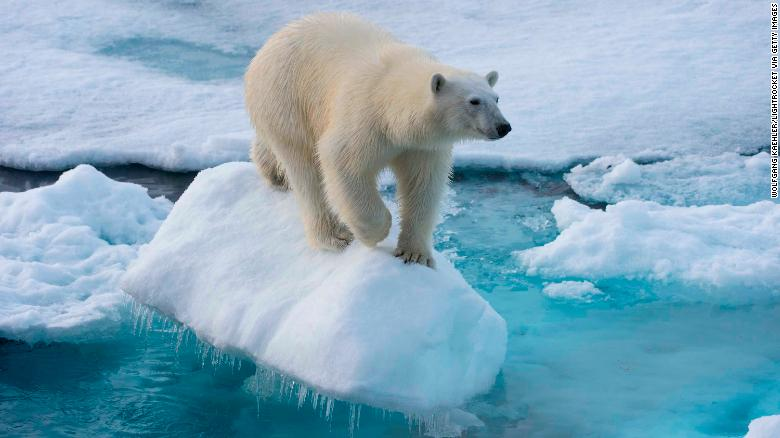 a study of polar bear Study: polar bears could feel global warming's sting by a polar bear mother and her two cubs are seen in wapusk national park on the shore krqe news 13 | 13.