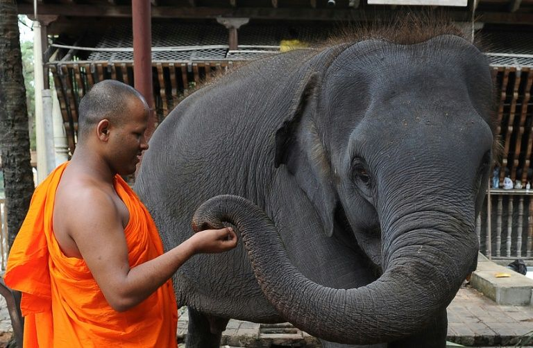 Sri Lanka elephant kills top Buddhist monk