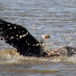 Nairobi Park Diary: Eagles versus crocodiles