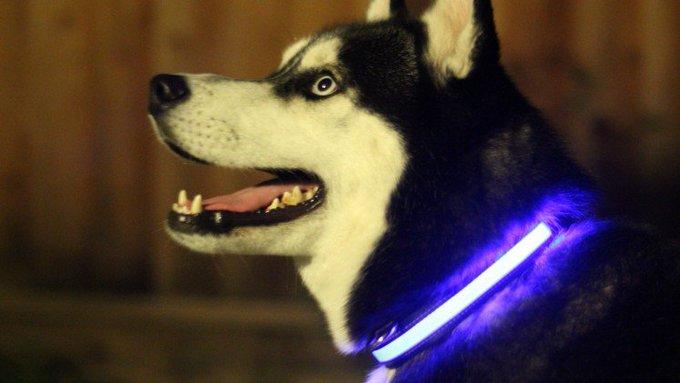Win LED Collar