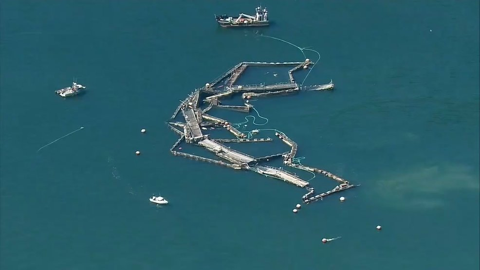 State cancels salmon farm's lease at site of net-pen collapse