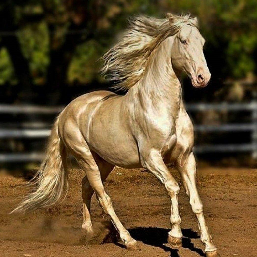 Fotos dos cavalos arabes 77