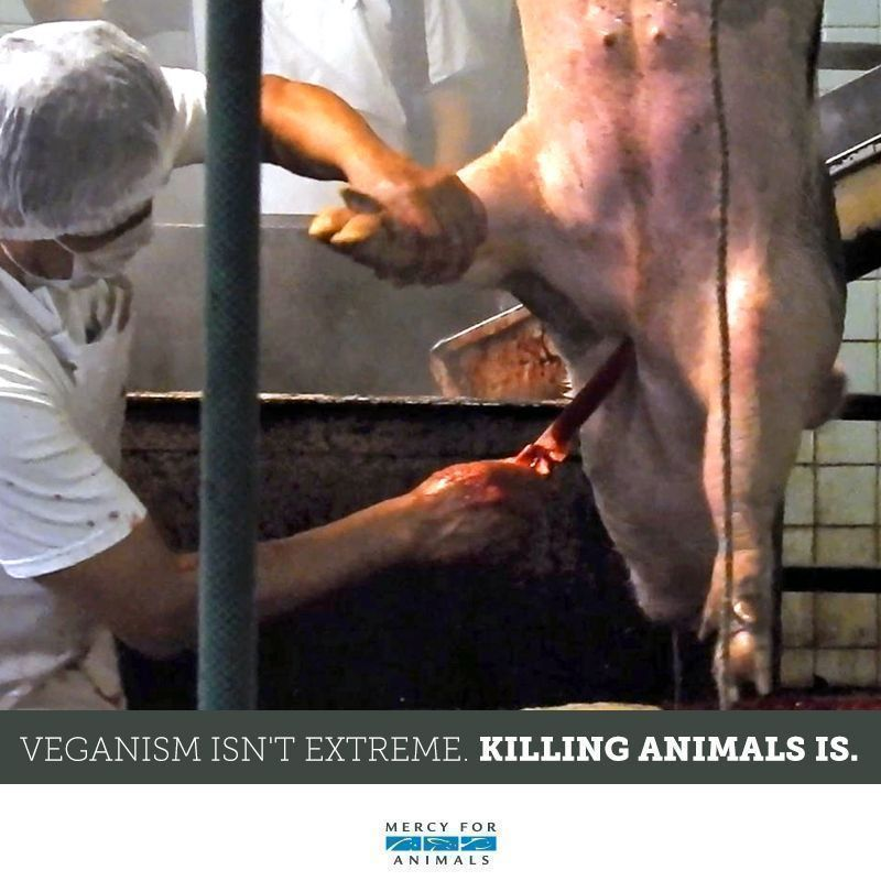 RT @MercyForAnimals: Veganism isn't extreme. Killing animals is. ❌ https://t.co/PEDw4utNXp