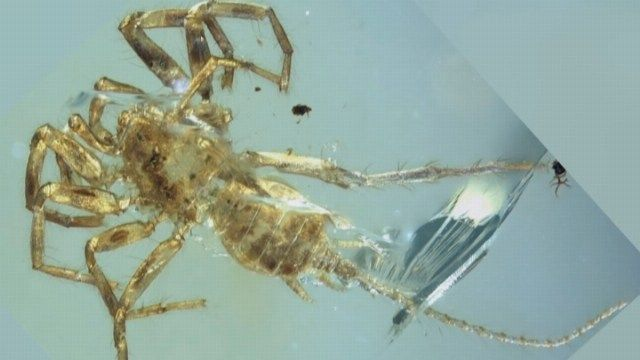 Ancient spider species with a tail discovered - | WBTV Charlotte