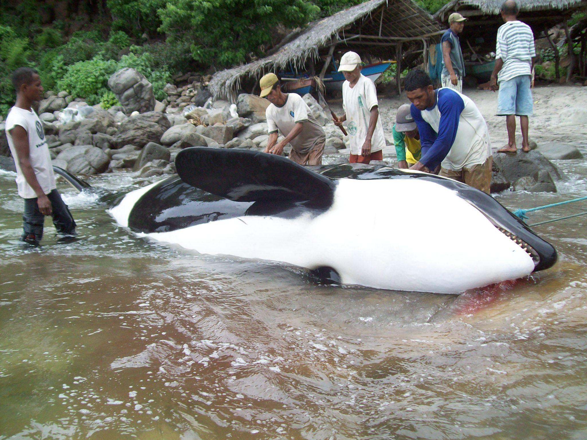 ICYMI: Progress in Indonesia! https://t.co/0SCE6ueUhl #DolphinProject https://t.co/VIGb95d9Mr