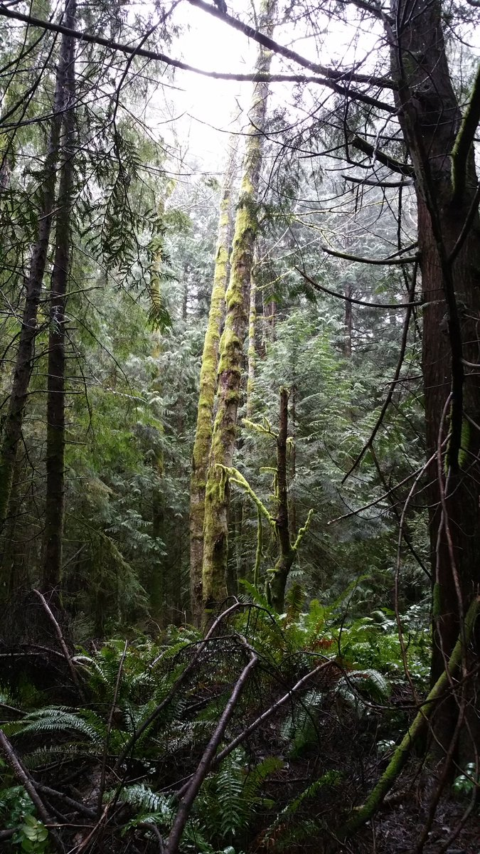 2 pic. Tpday: Woods Walk: Week 6 >>>> LyuAUYLO01 hlzYo60Doj