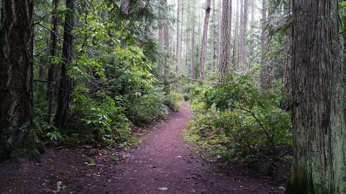 3 pic. Tpday: Woods Walk: Week 6 >>>> LyuAUYLO01 hlzYo60Doj