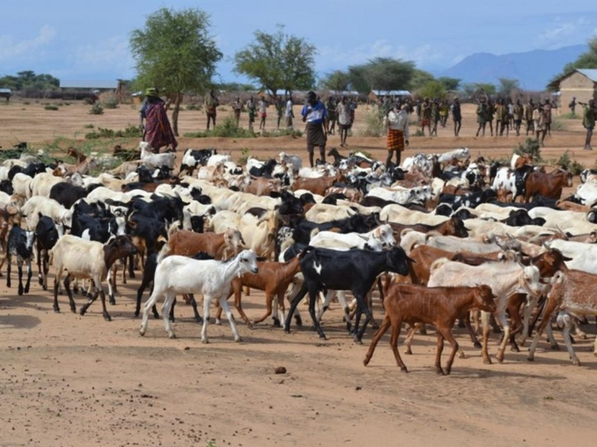 Kenya to benefit from UK's Sh500 million livestock research fund