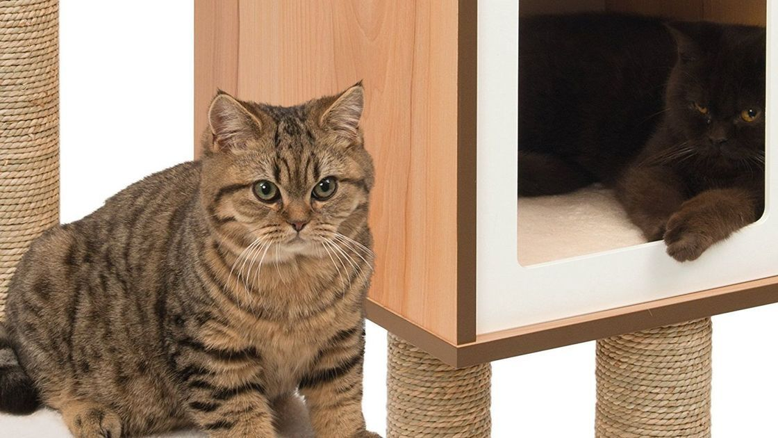 3 cool cat trees that won't cramp your style