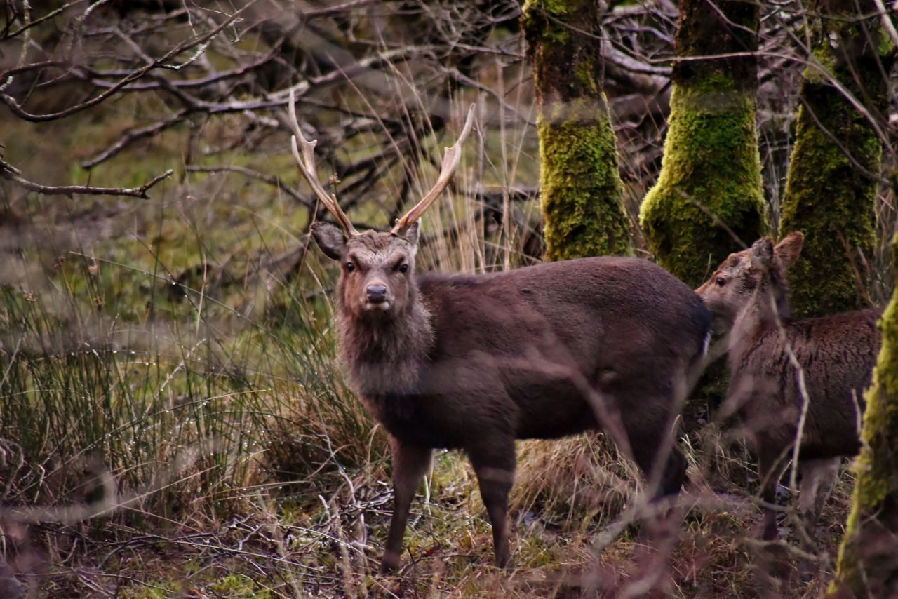Well, i'm not really sure what to make of these shots in #Killarney National Park this morning, suffice to say, something just ain't right! 😆 #LoveKillarney #WILDlife #Photography #LoveKerry #Nature #LoveIreland #DiscoverIreland @wilddeerireland @WildlifeMag ❤🍀📷 https://t.co/wgQePrRegW