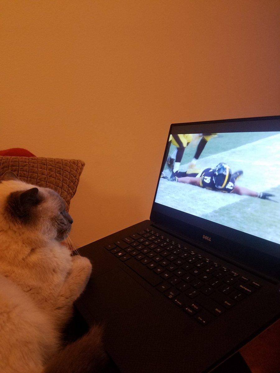.@TeamJuJu my cat is loving the mini-movie #TeamJuJu #FightOn https://t.co/xnVMyxdLmM
