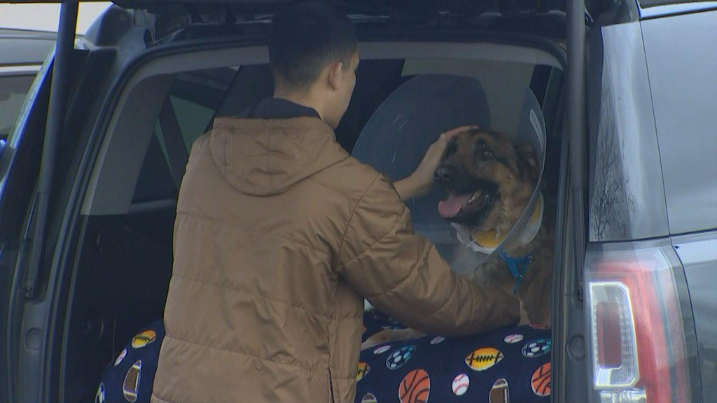 Rex the 'hero dog' goes home after successful surgery