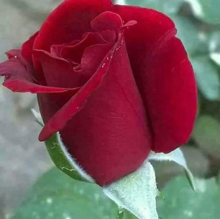 Good Morning Sister Have a Fantastic Sunday With all happiness in your life @sanjida_iqbal https://t.co/updq6g32vU