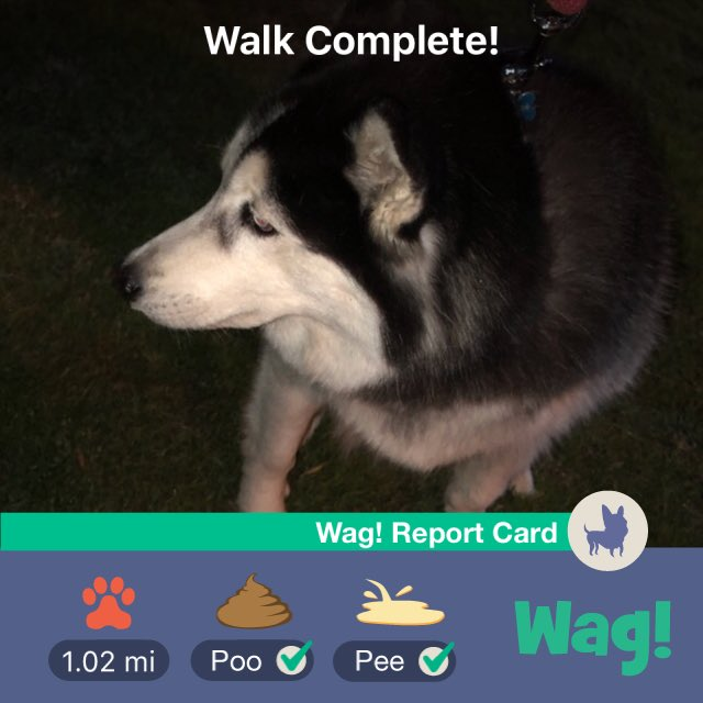 Just got my dog walked by Wag! Thanks so much ! f8PCr18rG3