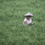China, voracious buyer of foreign agricultural land