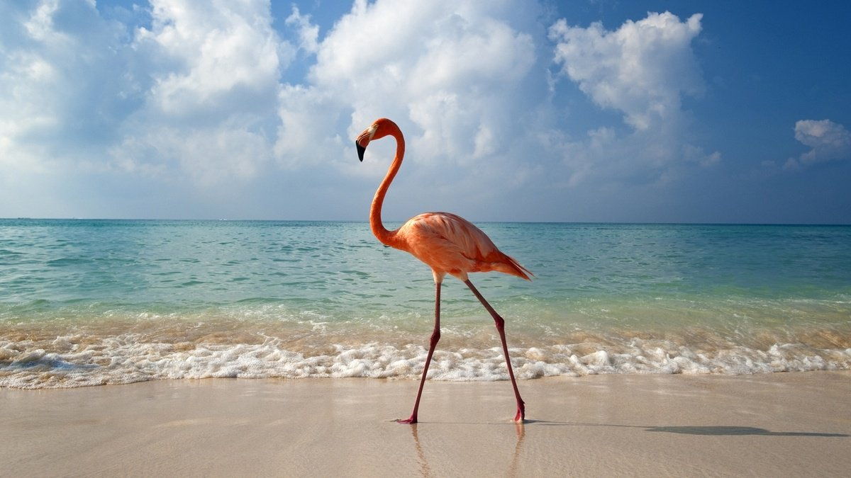 There's a job that will pay you to hang out with flamingos in the Bahamas