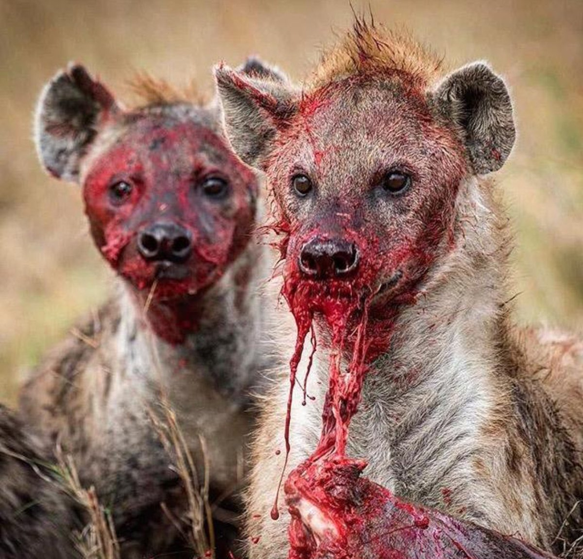 RT @5ft23inches: Current Mood: 🍽🏀🧐  HUNT or Be HUNTED...  #GameDay #CIFPlayoffs #PostSeason #SecureTheBag https://t.co/iGbGxQjqj2