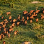 Kenya reports decline in elephant, rhino poaching