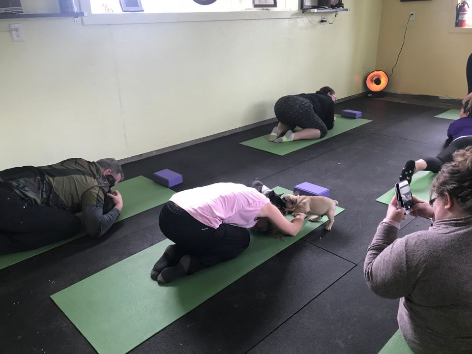 You can do yoga surrounded by puppies in Oregon