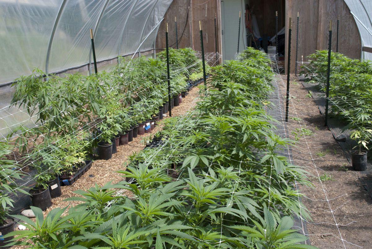 50 area doctors approved for medical marijuana program