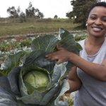 Kenya-Reality Show-Farming story