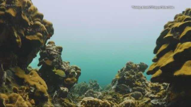 Oregon State filmmakers debut coral reef crisis documentary