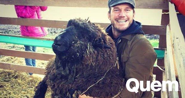 Chris Pratt. Foto do site da Quem Acontece que mostra Em fazenda, Chris Pratt se atraca com carneiro gigante para aparar cascos do animal.