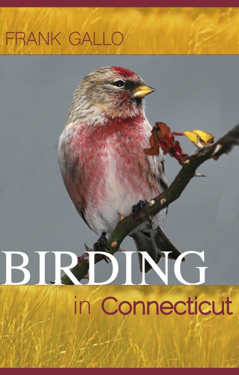 test Twitter Media - Maine bird guide author has 'Big Year' tracking down 305 species across state. We have our own bird book coming, also distributed by @UPNEBooks, in May! #YearOfTheBird  Our book: https://t.co/ueCPrgiMca https://t.co/w9k1GrxtKs via @bangordailynews https://t.co/u56LMWUDRk