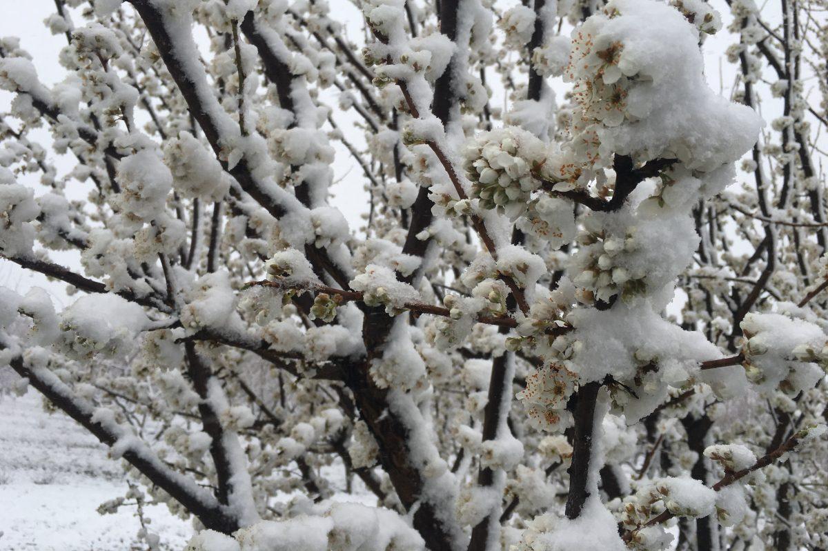 'Plowable' snowfall possible Saturday night