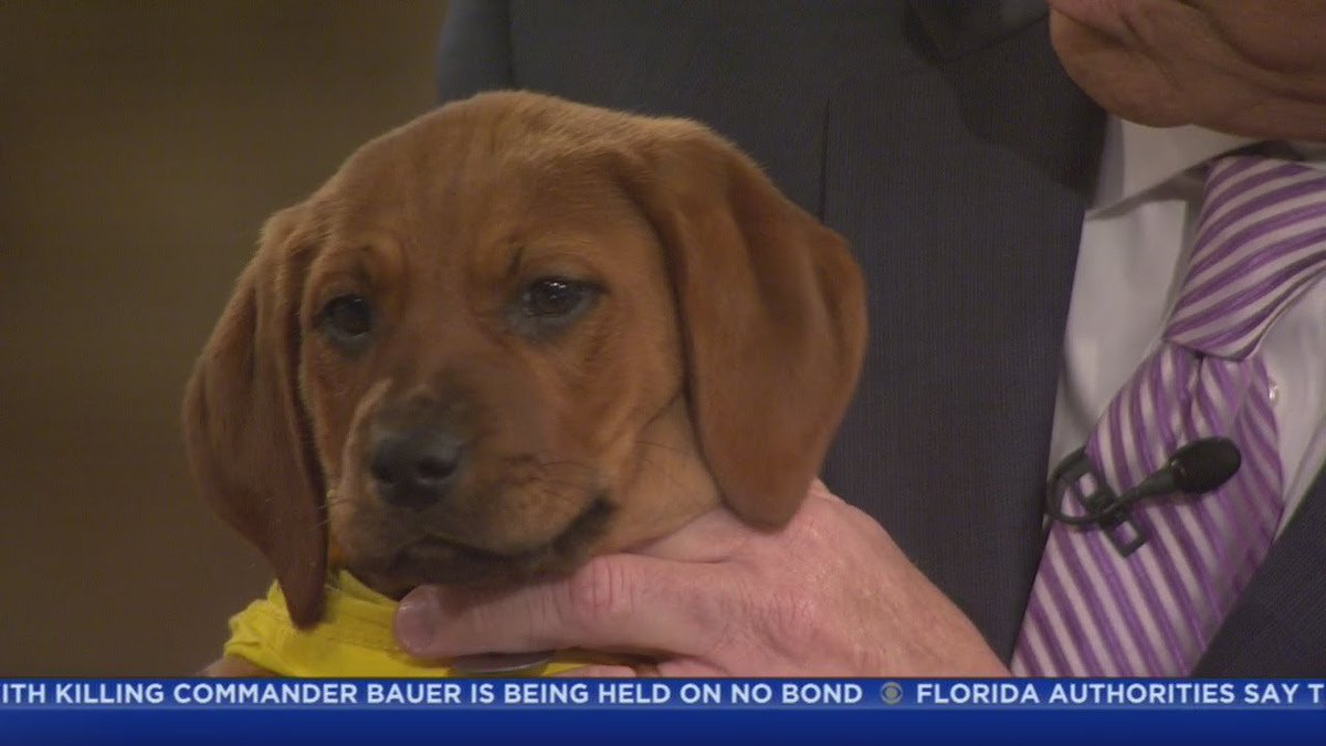 PAWS Pet Of The Week: Zeno