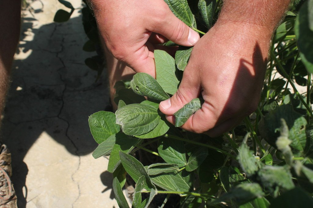 Arkansas judge dismisses Monsanto lawsuit on dicamba ban