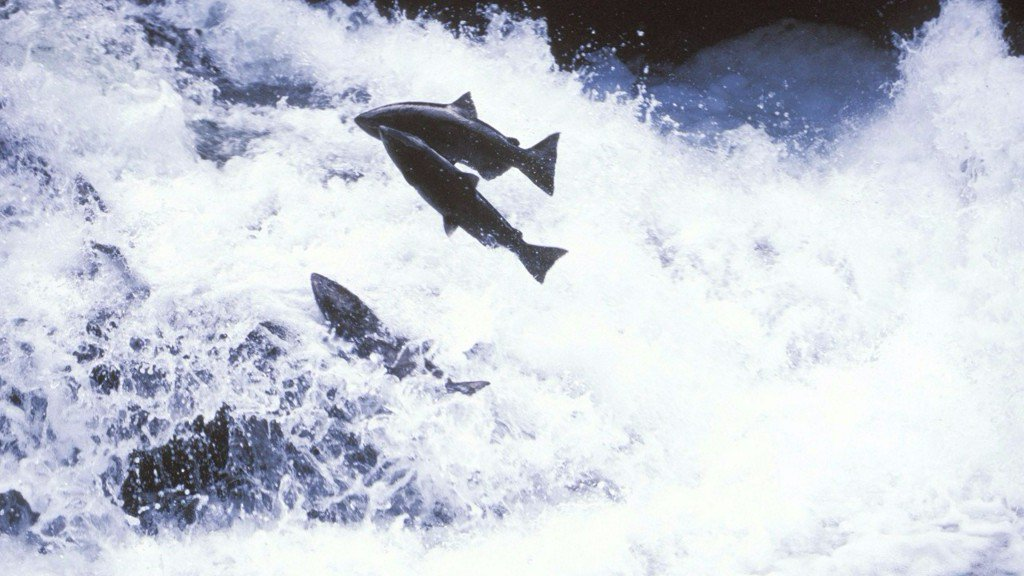 Idaho utility continues attempt to negate Oregon fish law