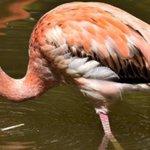 Resort in the Bahamas seeking 'Chief Flamingo Officer'