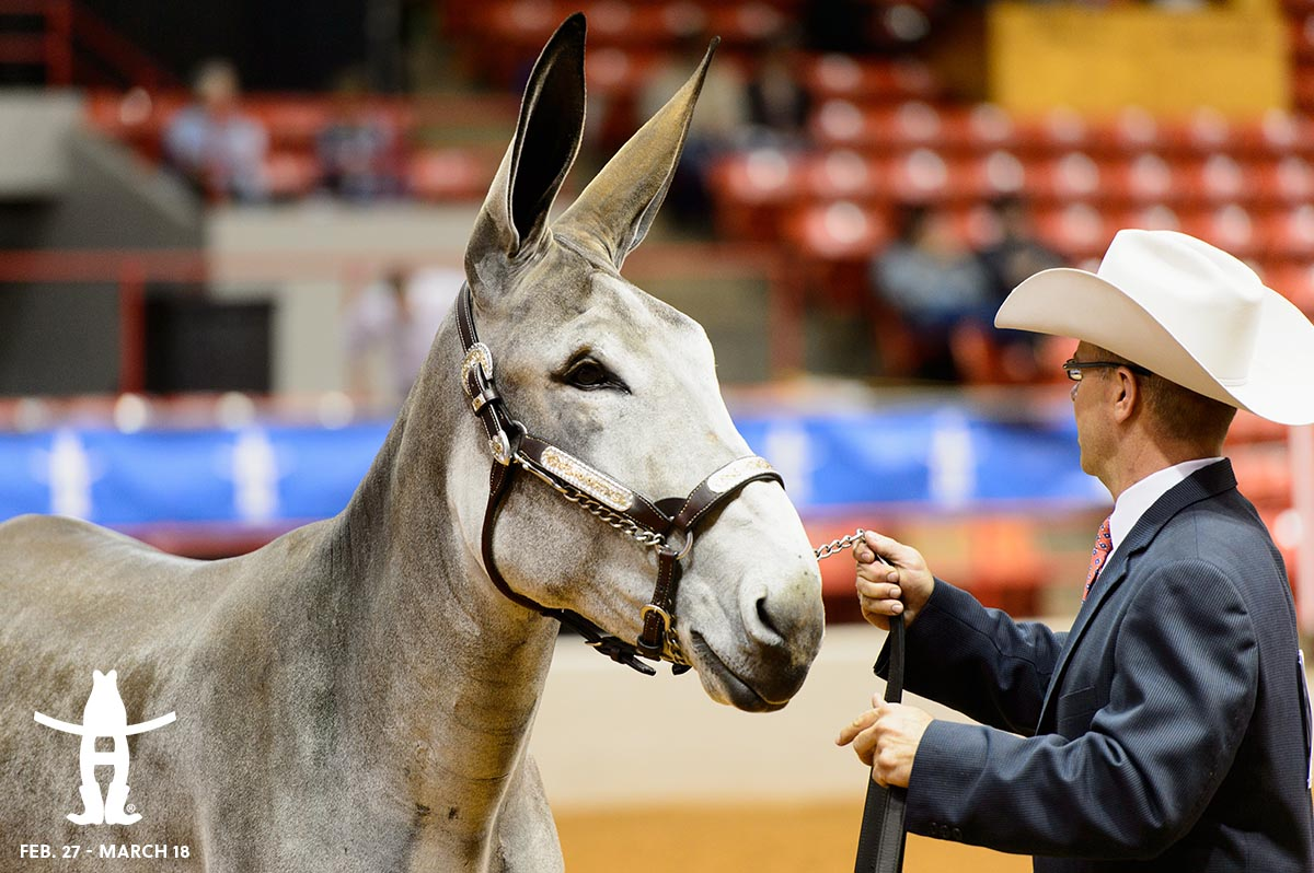 We've got so many new things to see at #RODEOHOUSTON this year. Mule love it! https://t.co/Dx8mf0kpWb