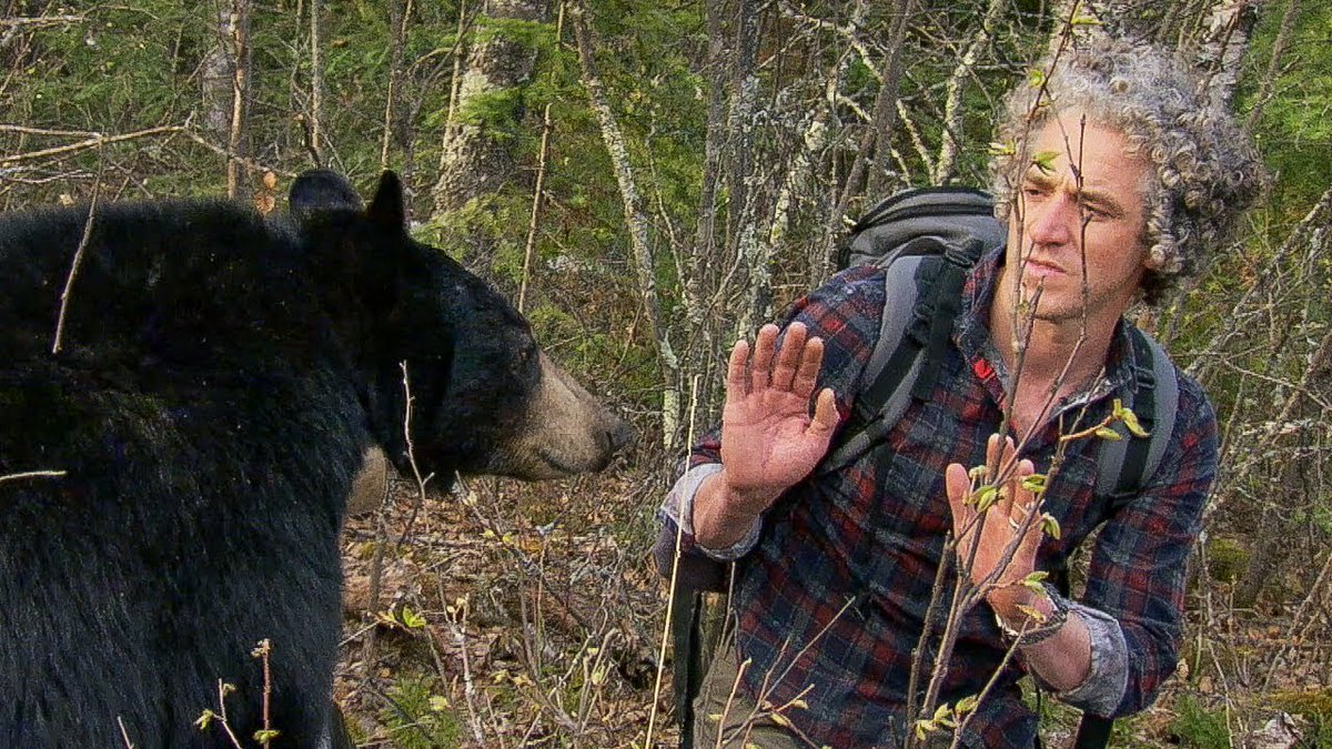 Bear Bite: how not to gain a bear's trust | BBC Earth