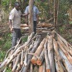 Loggers, charcoal burners killing unique coastal forest