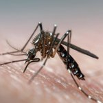 Other viruses cause Zika-like damage to fetuses, study finds
