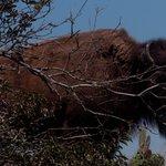 Buffalo gores camper on Southern California island