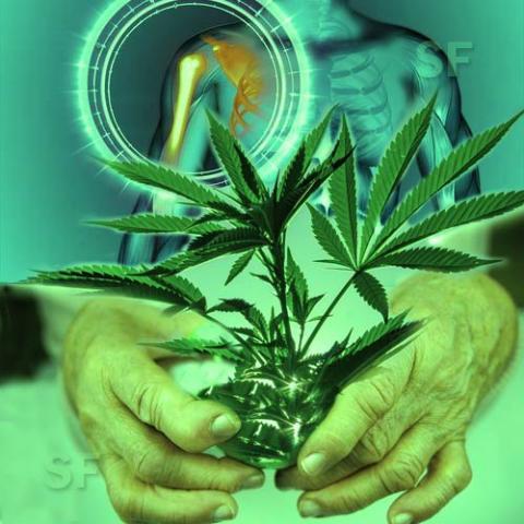 The phytoannannabinoids present in #canabis can repair damaged joints https://t.co/qOXC25m3gm #arthritis #Rheumatism https://t.co/JVFHfDm7ad