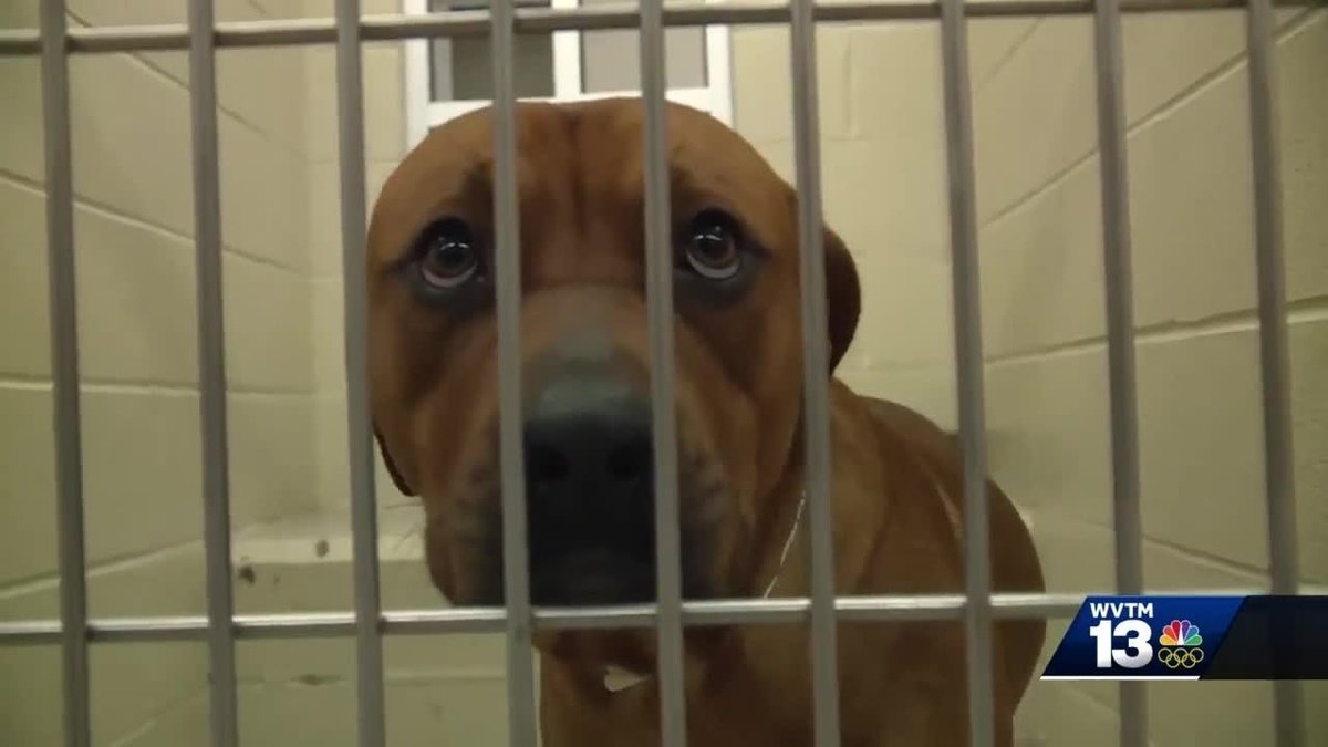 Birmingham humane society talks growing problem with puppy mills in Alabama