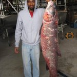 SIU gets 115-pound black carp specimen for further study