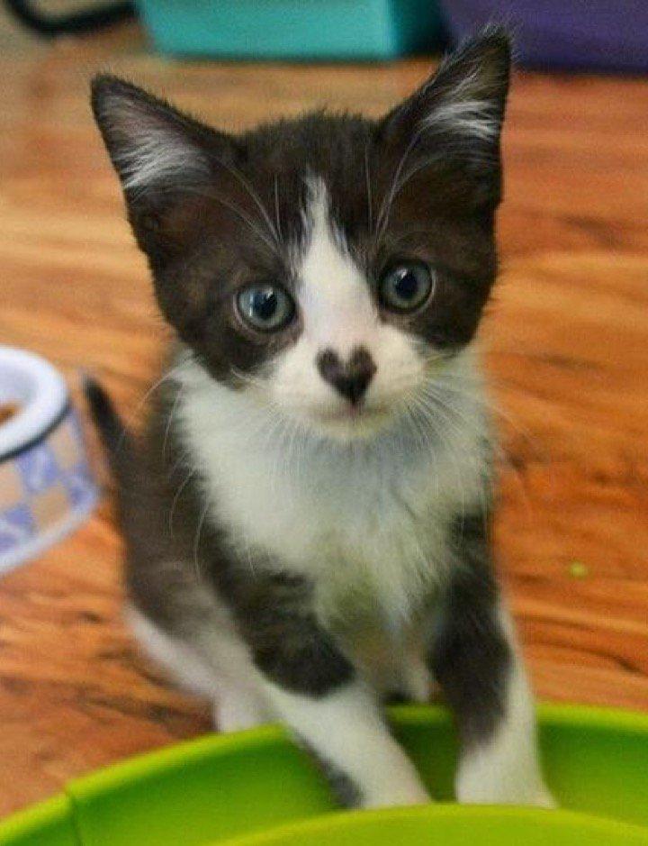 This little kitty has definitely got my heart... https://t.co/BYkkeIfBZm